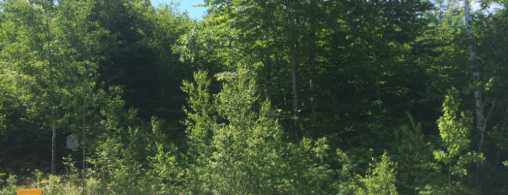 Southern Maine Land for Sale in Acton, Maine - Easy Owner